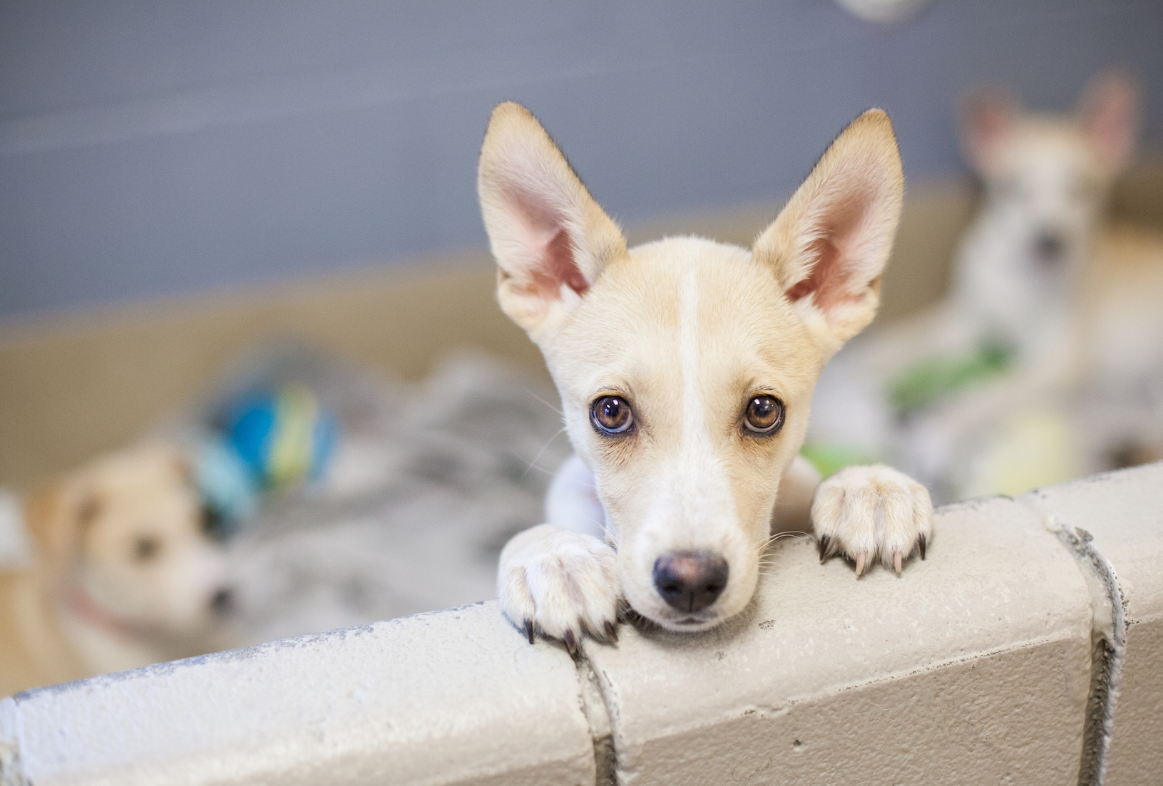 Labels can greatly influence how long it takes for shelter dogs to be adopted, primarily because of the associated behaviors.