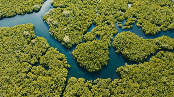 Mangroves may be able to adapt to rising sea levels brought on by climate change and provide a natural defense against storm surges.