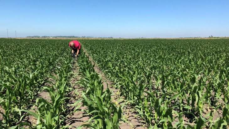 A new study reports low-tech ways to improve soil quality on farms while pulling carbon out of our atmosphere and slowing climate change.