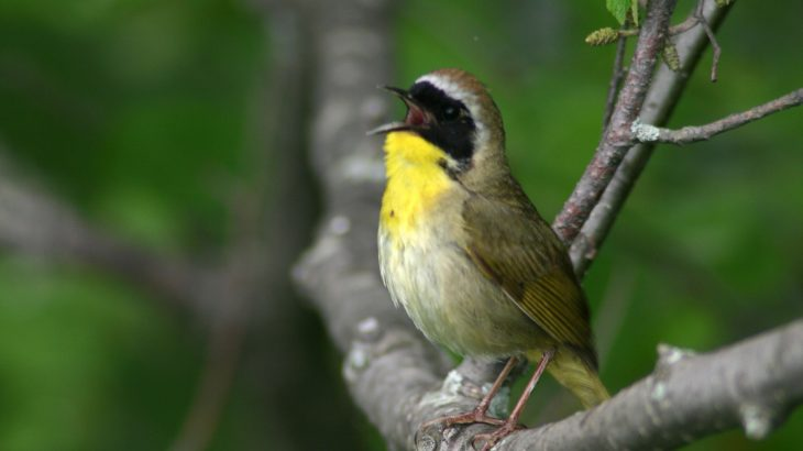 Experts at the University of Alberta have tested a new statistical method to better estimate the size of bird populations.