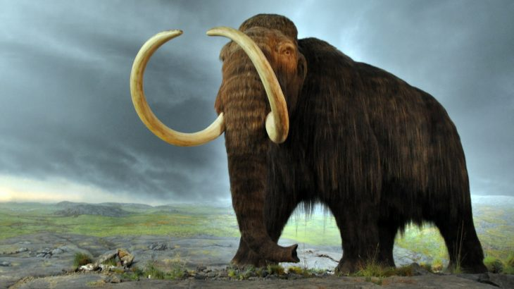 The woolly mammoth has long captured our attention and there has been talk of bringing the species back from extinction before.