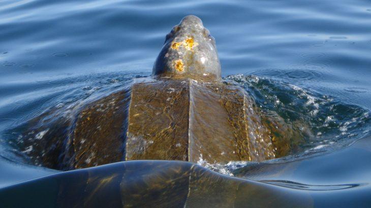 A new study from the University of California Santa Cruz has tracked 14 species of migratory marine predators.