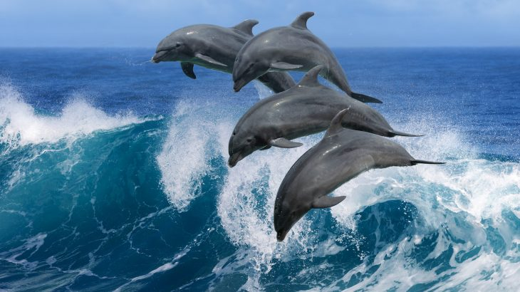 Scientists have found that the chemical compounds used in a variety of household products have been discovered in the bodies of dolphins.