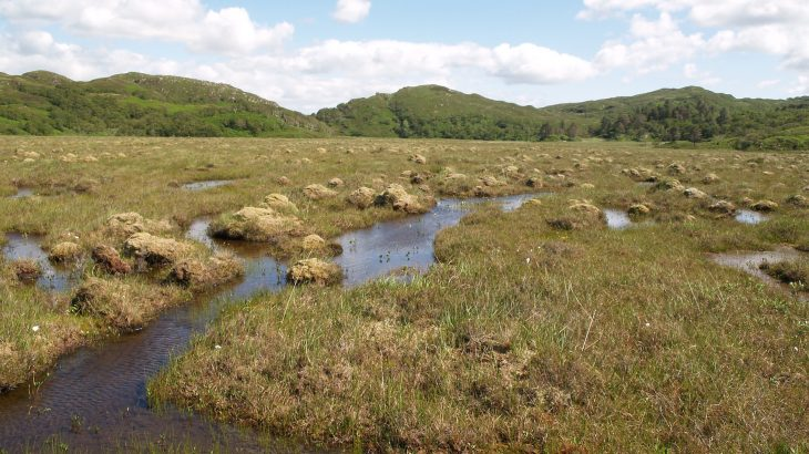 A new study by an international team of 70 scientists has revealed that global warming will cause peatlands to absorb more carbon.