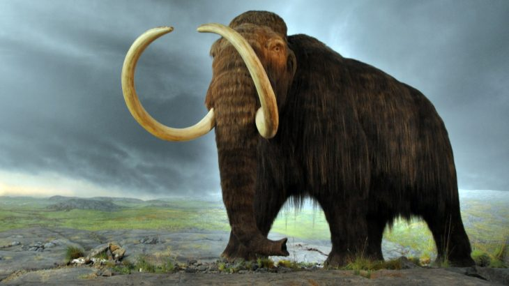 Researchers from the Tomsk State University believe that weak bones may have been the driving factor behind the decline of woolly mammoths.