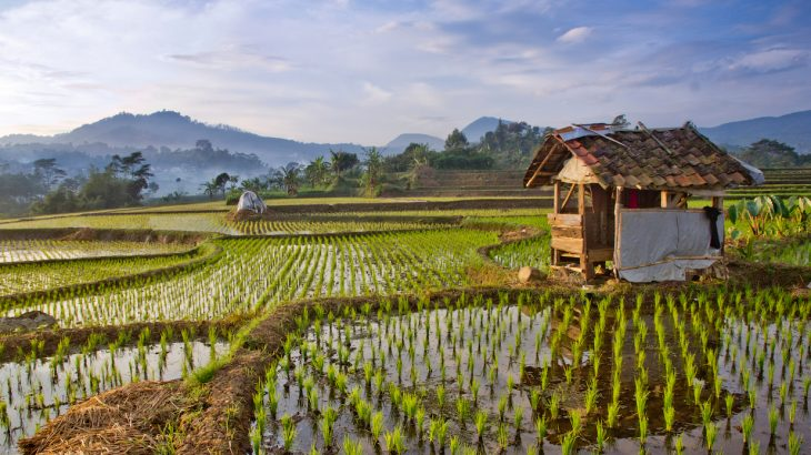 According to a new study, the impact of rice farming on climate change could be almost double what previous estimates have found.