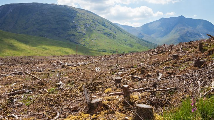 Europe using wood as biofuel will increase deforestation, warming •  Earth.com