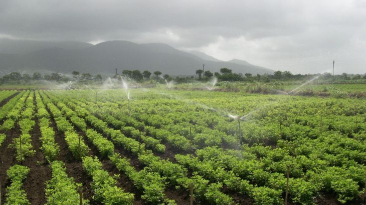 According to recent estimates, as much as 70 percent of all the world's freshwater is used for crop irrigation.