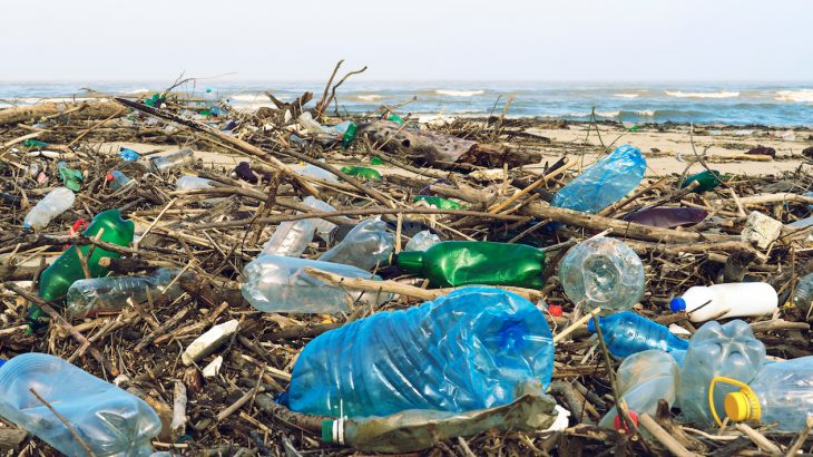 One fungus species can break down plastics in a matter of weeks, which is a process that normally takes hundreds of years.