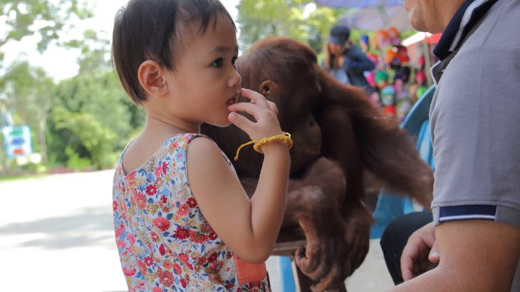 A recent study has found that toddlers use some of the same gestures as chimpanzees and gorillas to communicate.