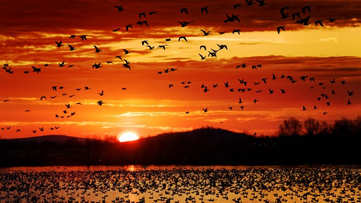A new bird migration forecast model could help with bird conservation and predict major bird migrations as soon as seven days beforehand.