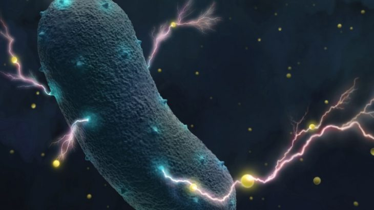 Scientists at UC Berkeley have discovered that bacteria which are commonly found in the human gut produce electricity.