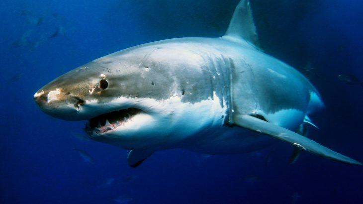Experts have discovered a great white shark lair hidden in the Pacific Ocean, located between Mexico's Baja California and Hawaii.