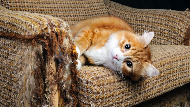 New research has found that exposure to chemicals found in common household products can lead to endocrine disorders in cats.