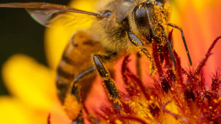 Researchers have discovered that the most commonly used weed killer in the world may be inadvertently killing bees.