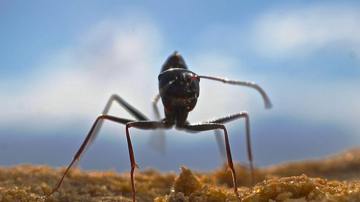 A new study reveals how desert ants can quickly learn many different food odors and remember them for the entirety of their lives.