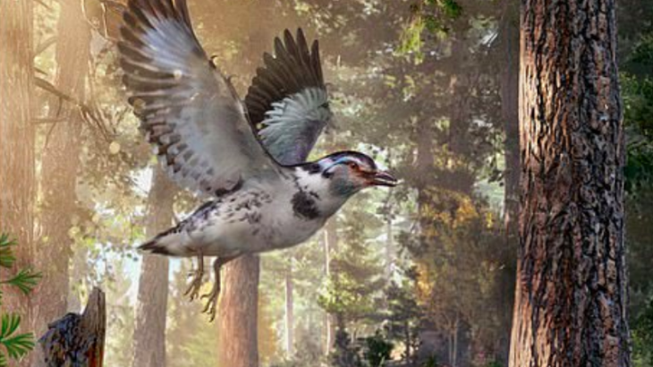 A fossil that dates back 127 million years is providing insight into the genetic link between modern birds and ancient dinosaurs.