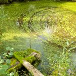 Algal blooms occur regularly around the world, and can be harmful to the environment – as well as the economy.