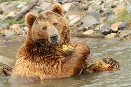 The decision by the U.S. Fish and Wildlife Service to remove protections of Yellowstone area bears has been overturned.