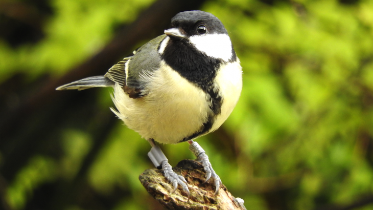 Male birds who are shy have a tendency to play the field, while the males who are more bold focus on forming strong, monogamous relationships.