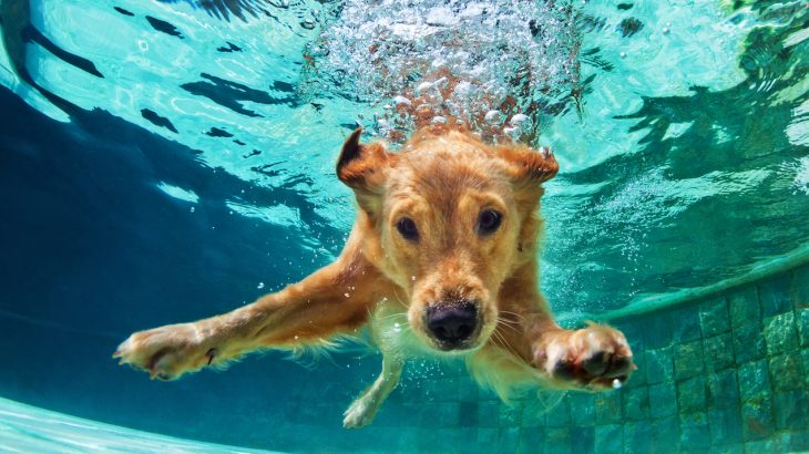 An investigation revealed that the intelligence of dogs has been overestimated when they are compared to other animals.