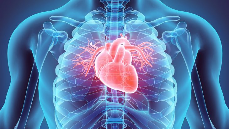 In a new study, researchers from Australia report the most in-depth study ever of how human stem cells can be turned into heart cells.