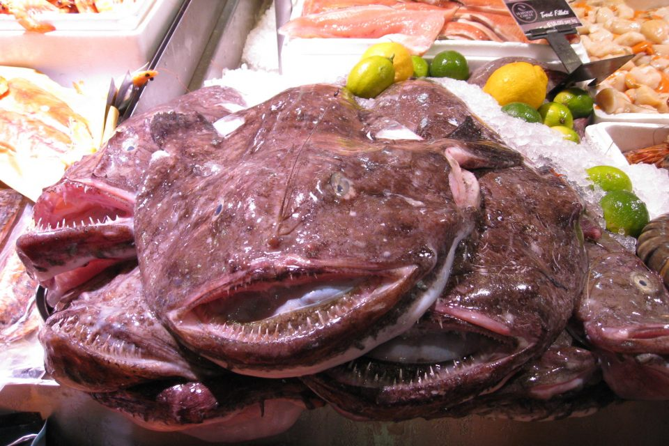 """Once referred to as the """"poor man's lobster,"""" monkfish now features prominently on the menus of many fine restaurants."""