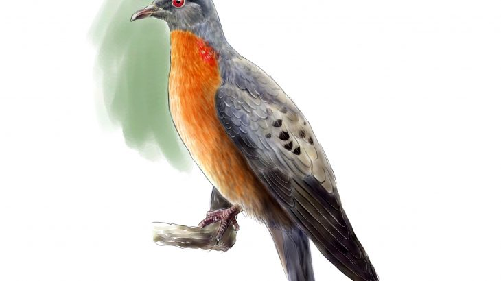 Ben Novak is a scientist committed to de-extinction and bringing back the passenger pigeon using hybrids and gene editing.