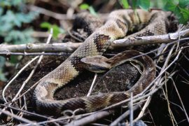 Experts have identified an inexpensive, plant-based compound that may help in treating snake bites along with anti-venom.
