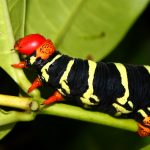 A disturbing new study has revealed massive, widespread declines in insect populations in the forests of Puerto Rico.