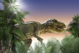 A new study has revealed that Tyrannosaurus rex and other theropods had uniquely-shaped feet that could be used to launch sneak attacks.