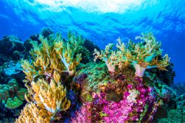 An increase in water temperatures may benefit corals to some extent because it increases the aggressiveness of fish that guard the reef.