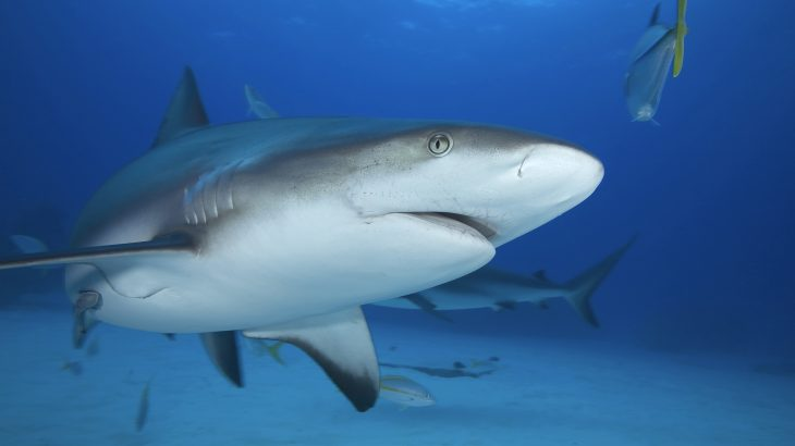 Shark sanctuaries were implemented as a buffer against fishing and are meant to serve as a conservation area.