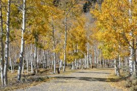 The Pando aspen clone is connected by the same route system and is considered the largest and oldest living organism in the world.