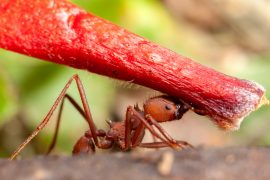 The miraculous habits of ants shed their prosaic associations and provide startling and wondrous insights into the evolution of sociality.