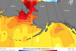 The Pacific blob has returned, bringing abnormally warm weather to the Pacific Northwest and Alaska.