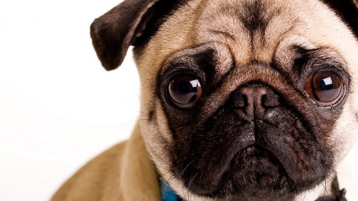 The popularity of certain pet breeds on social media is also pushing more and more people to buy designer and hybrid.