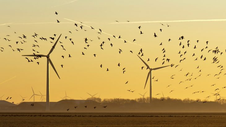 As wind turbines increase in popularity as a form of sustainable energy production, certain bird species may be at risk of depletion.