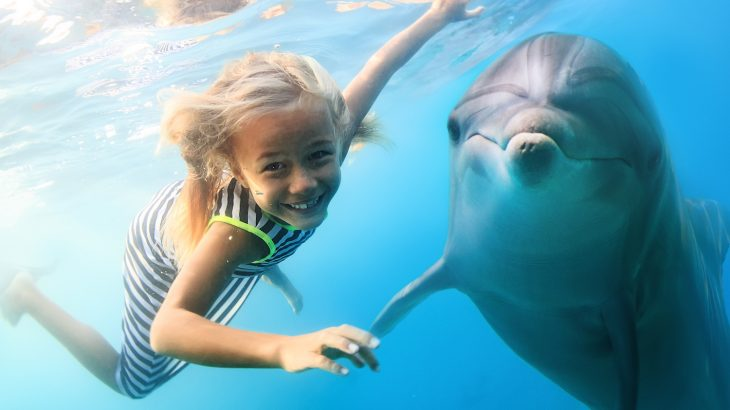 A new study has found that tourist activities are making dolphins more vulnerable to sharks and other predators.