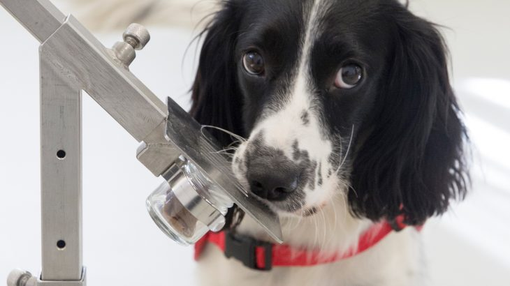 Researchers at Durham University are reporting that dogs could be trained to sniff out and diagnose malaria in people.