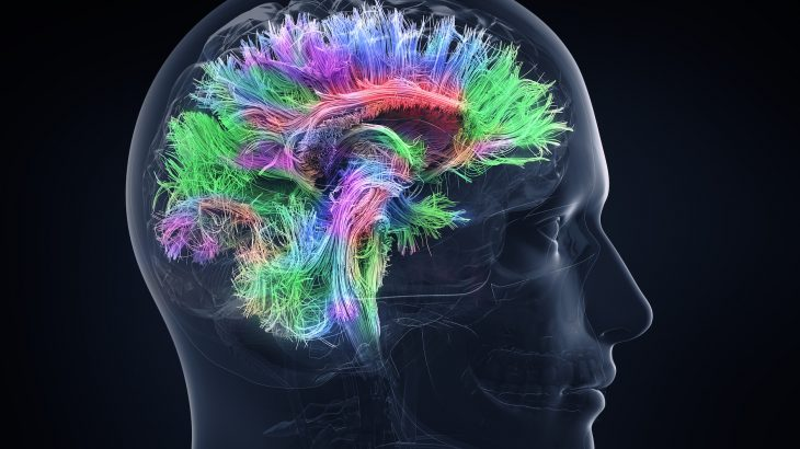 How does our brain know when to remember and retain other information that is important, but not something we're actively trying to learn?