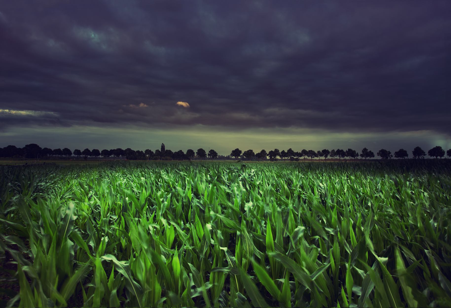 Plants Are Storing More Carbon Thanks To Nighttime Activity