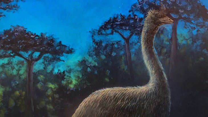 A recent study of elephant bird skulls has yielded some surprising revelations, including that the birds were likely nocturnal.