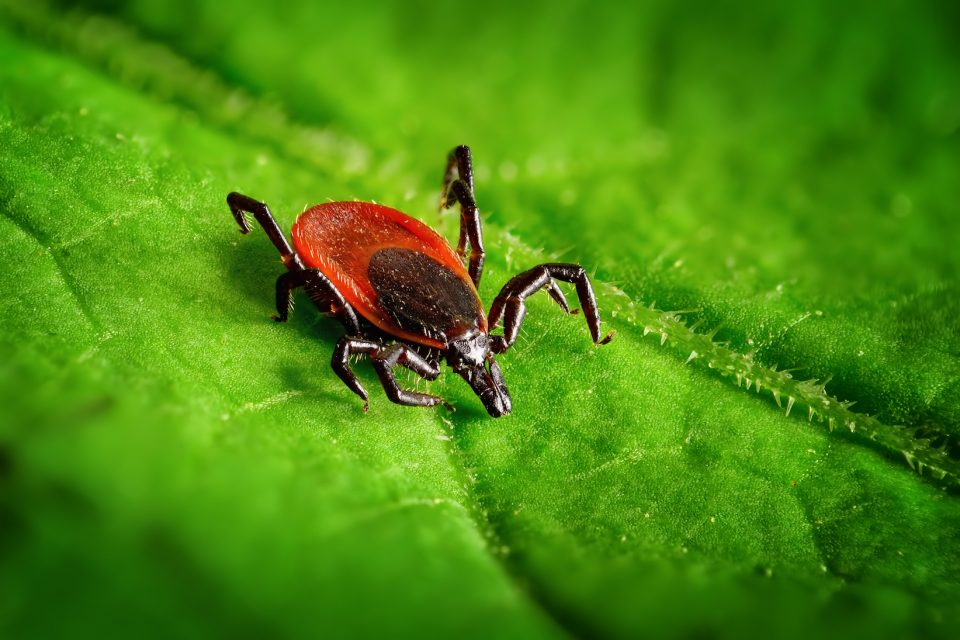 Over the past few years, Lyme disease has been on the rise, and research shows that climate change may be responsible.