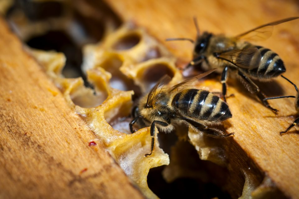 A new study found that exposure to neurotoxic pesticides like neonicotinoids caused measurable changes in worker bee behavior.