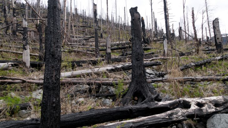 Large-scale forest disturbances including wildfires, disease, and drought will continue to rise alongside climate change.