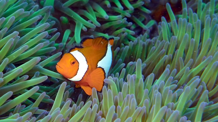 From numerous fish species, to turtles and other underwater organisms, coral reefs are not just a thing of beauty, but a scientific marvel.