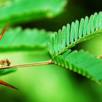Over time, plants have evolved a system of features that allowed them to use foraging ants to their advantage.