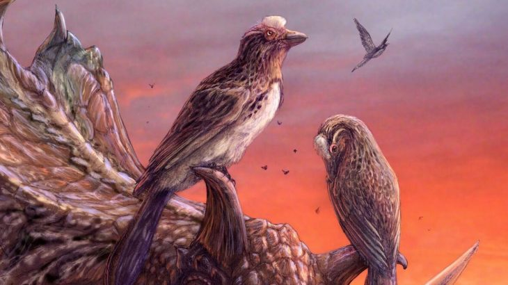 The most complete skeleton ever found from a long-extinct group of birds called Enantiornithines has been recovered in Utah.