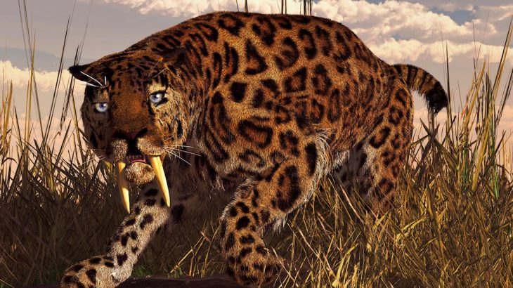 Experts have found evidence to suggest that sabre-toothed cats may have actually been nurturing, sharing their food with injured cats.